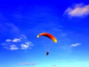 Yellow Glider-2